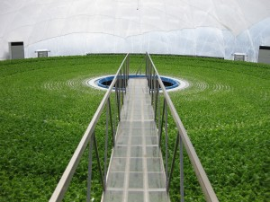 Lettuce carousel in the Granpa Dome