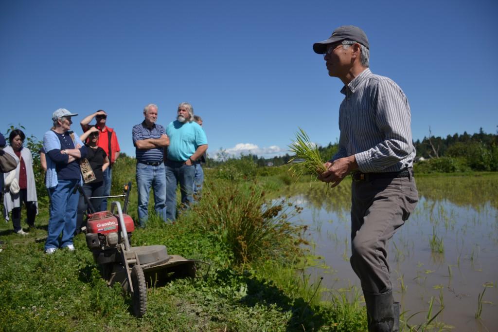 Masa Shiroki in his Abbotsford rice field.