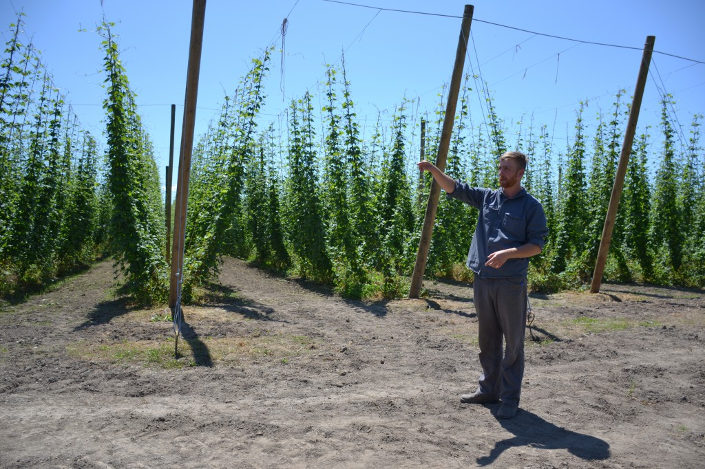 Hop fields (Valley Hops and BC Hop Co)