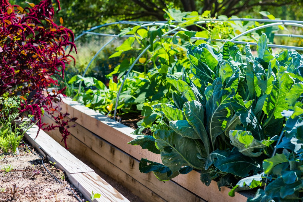 Urban farms create pockets of green in the city.