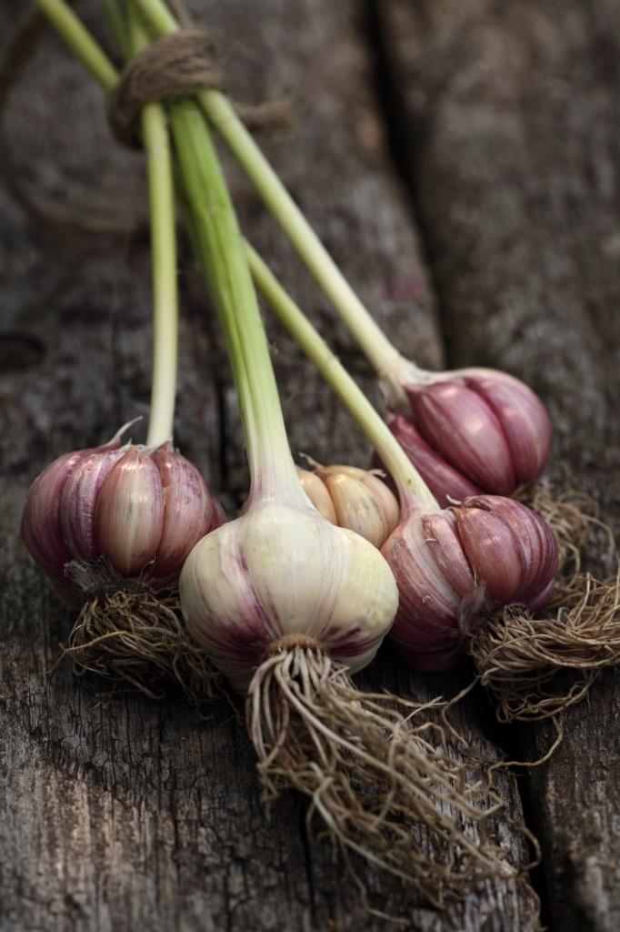 garlic in BC