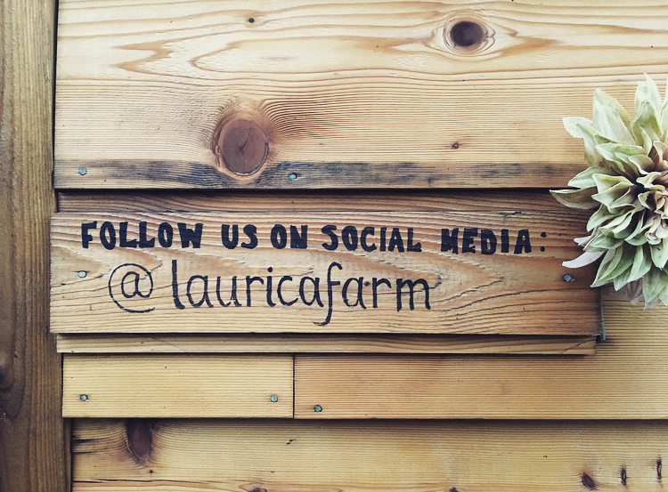 LauricaFarmSocial (2)