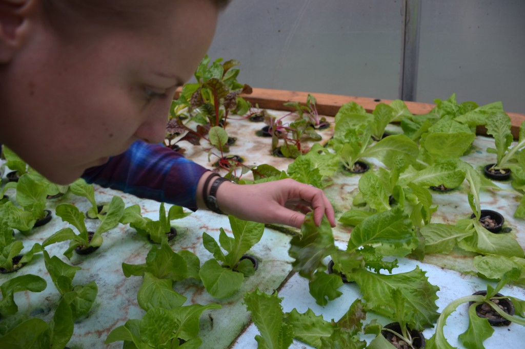 By using fish and IPM in a man-made wetland, You Grow Food Aquaponics is held to very natural standards.