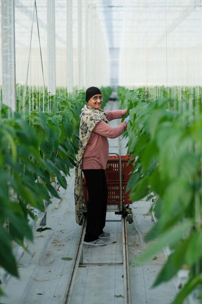 Approximately 120 BC greenhouses employ around 2275 workers.